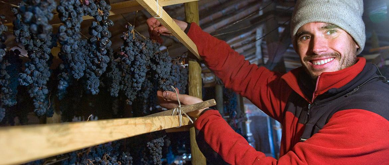 El viticultor que escucha