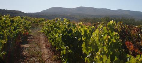 Fuente León Viñedo Moncalvillo, Sojuela, La Rioja